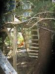 new safe stairs for the old tree house